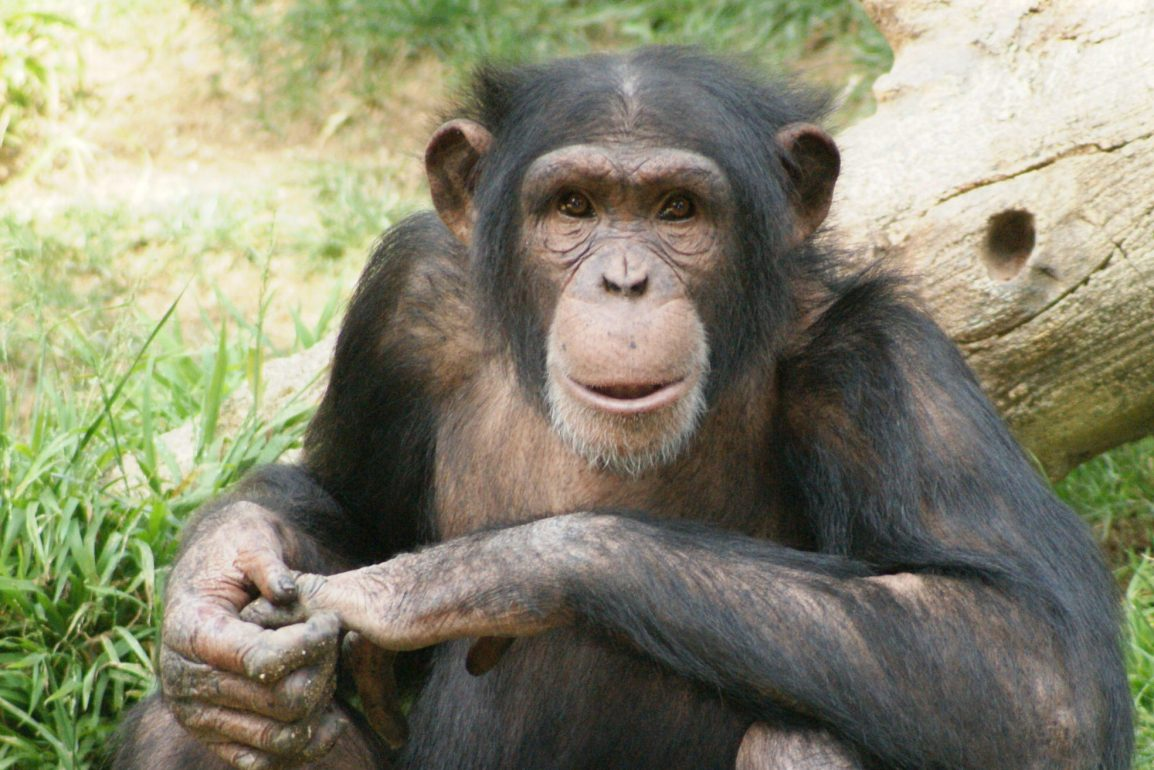 Image result for ape